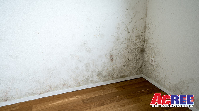 Acree How To Spot Mold And Get Rid Of It